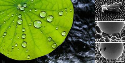 super-hydrophobic biomimetic surfaces